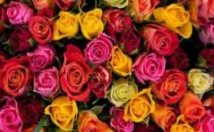 Intencje Róż Różańcowych na Luty 2016
