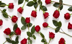 Intencje Róż Różańcowych na Ostrogu na czerwiec 2017