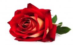 Intencje Róż Różańcowych na Miesiąc Luty